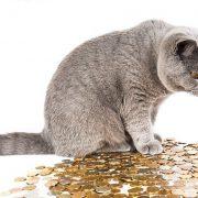 ペットを飼う前に知っておきたいお金とトラブルの関係