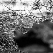 【専門家記事】地震保険とは。補償内容や加入するポイントをFPが解説します!
